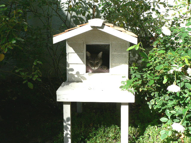 Raised Insulated Cat House